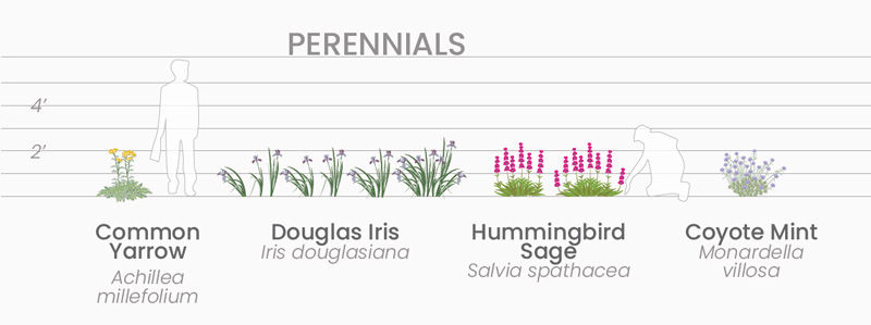 California native plant sizes