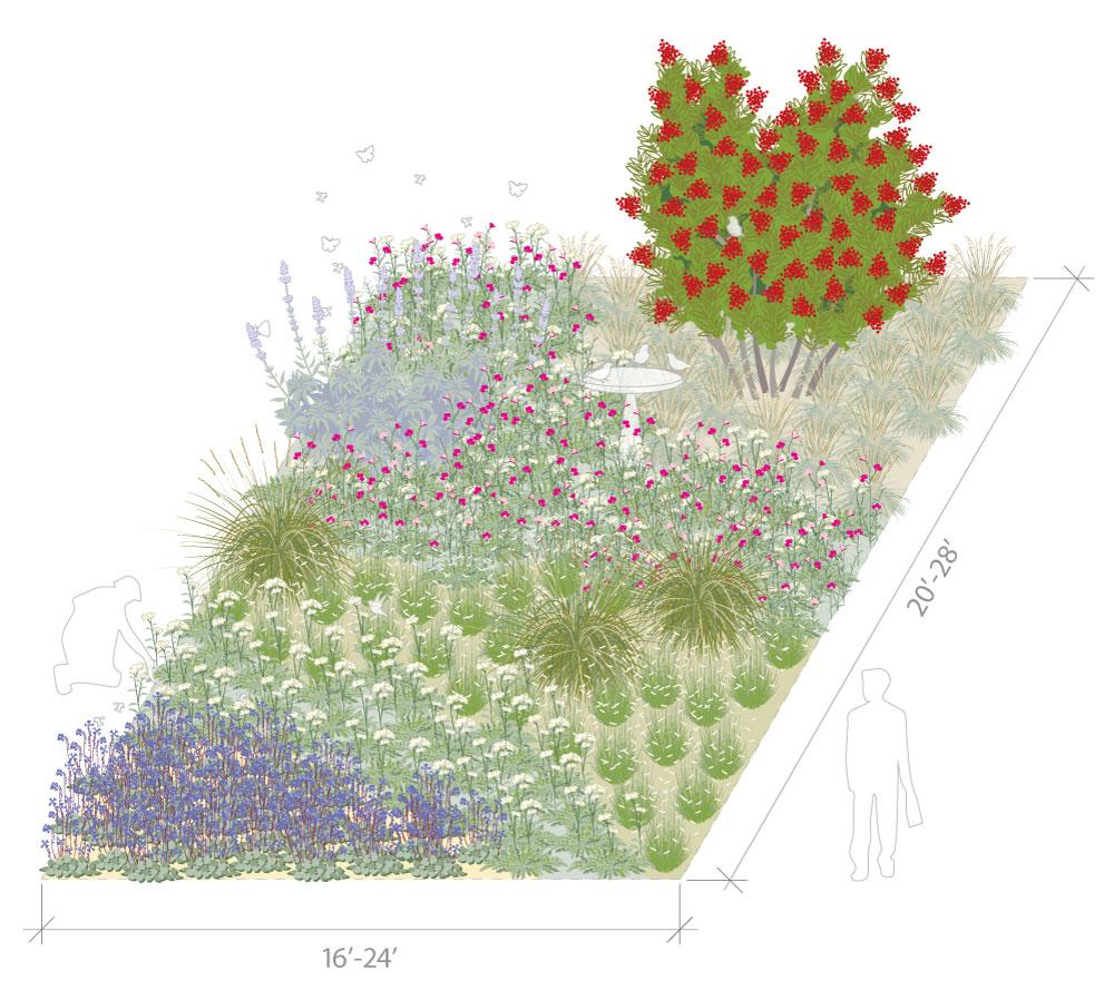 California native pollinator plants for full sun